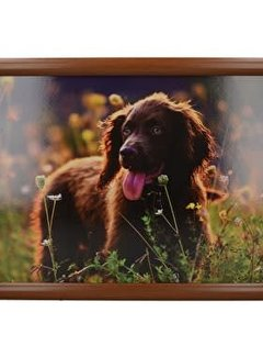 Creative Tops Laptray premium  Spring Field Spaniel , cocker spaniel