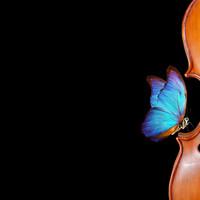 6 tips bij het kopen van een viool, altviool of cello