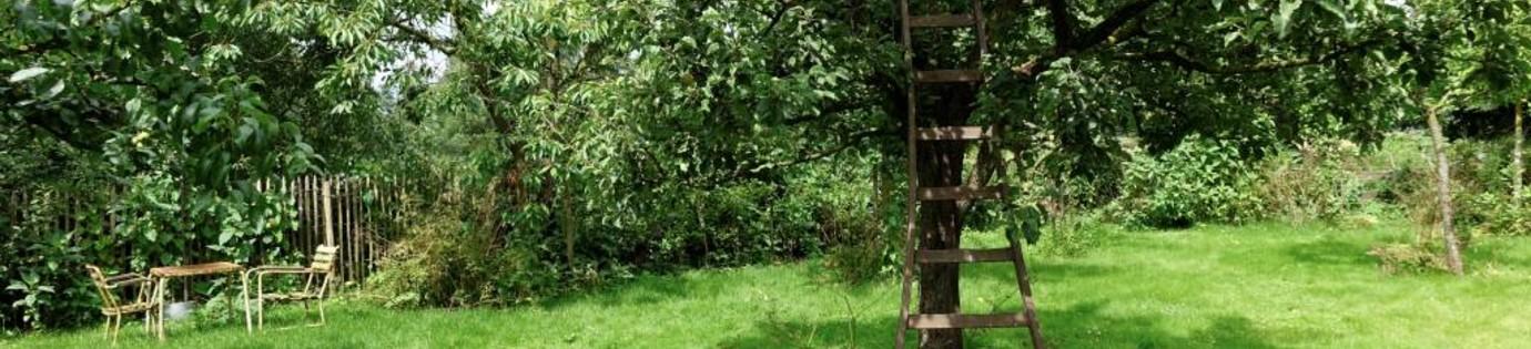 Fruitbomen snoeien: wanneer en hoe snoei je welke boom?