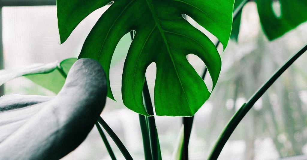 6 tips voor kamerplanten in de winter