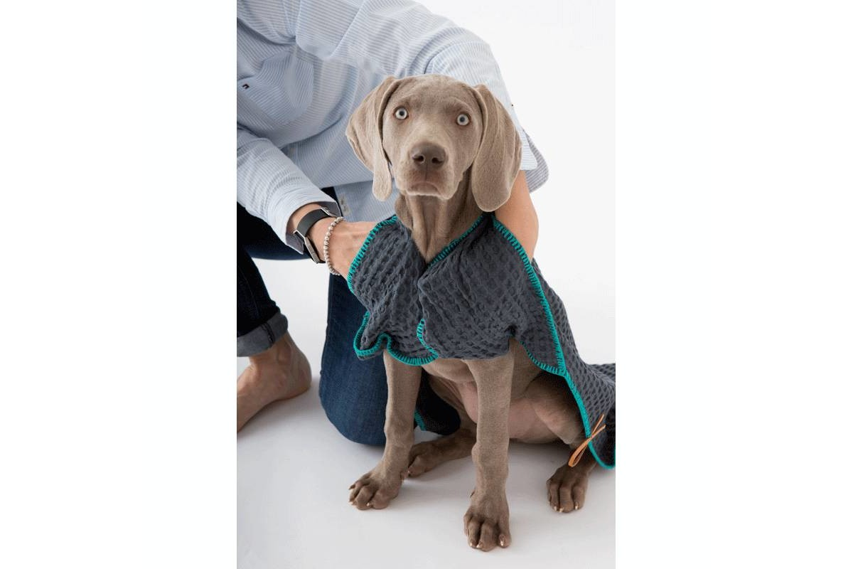 2.8 design for dogs Sally Dog Towels Grey