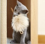 Luxury cat stuff