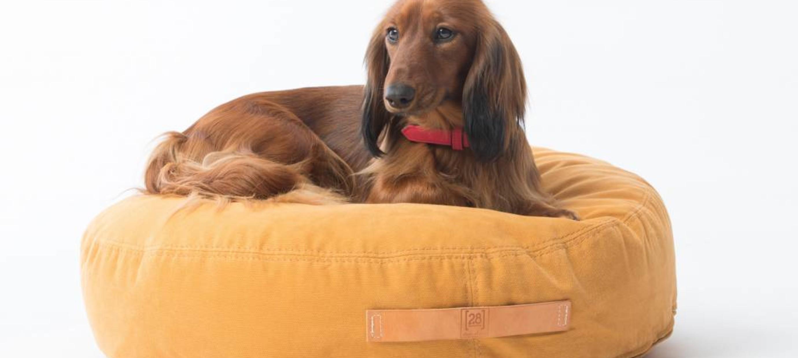 Artritis bij honden
