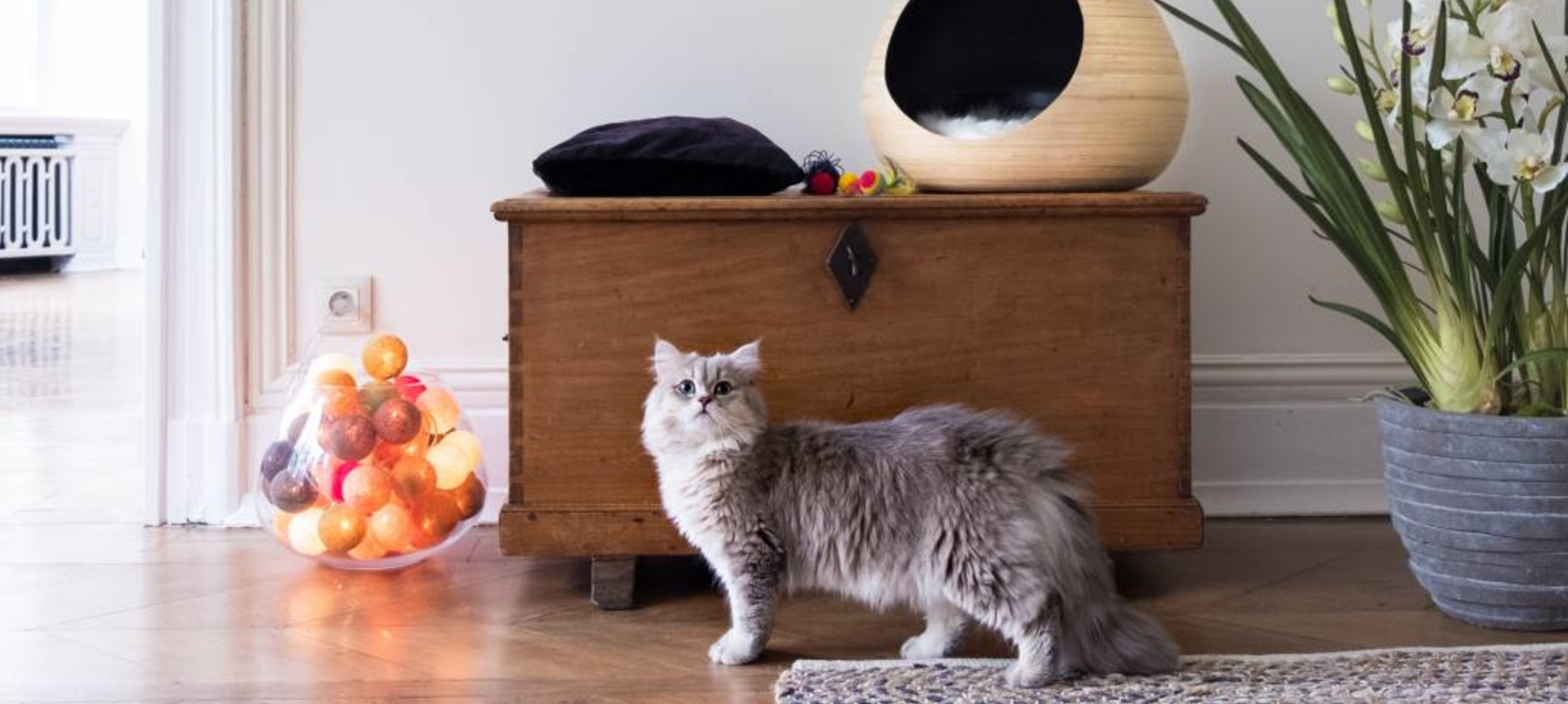 Millieuverrijking voor katten