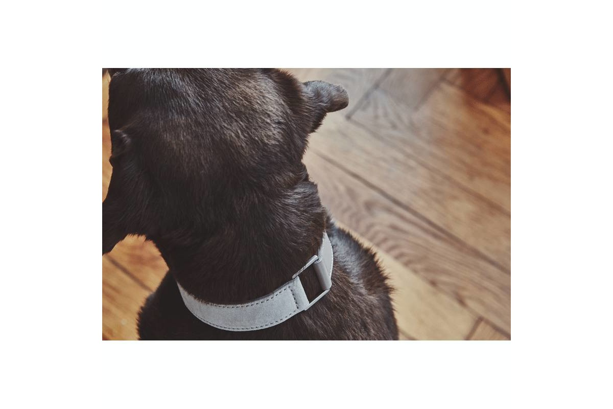 MiaCara Como Dog Collar Nougat
