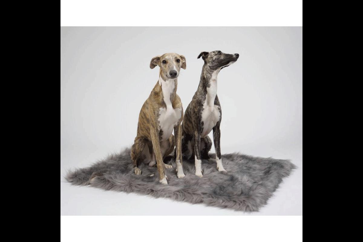Labbvenn Föra Dog Blanket Cappuccino