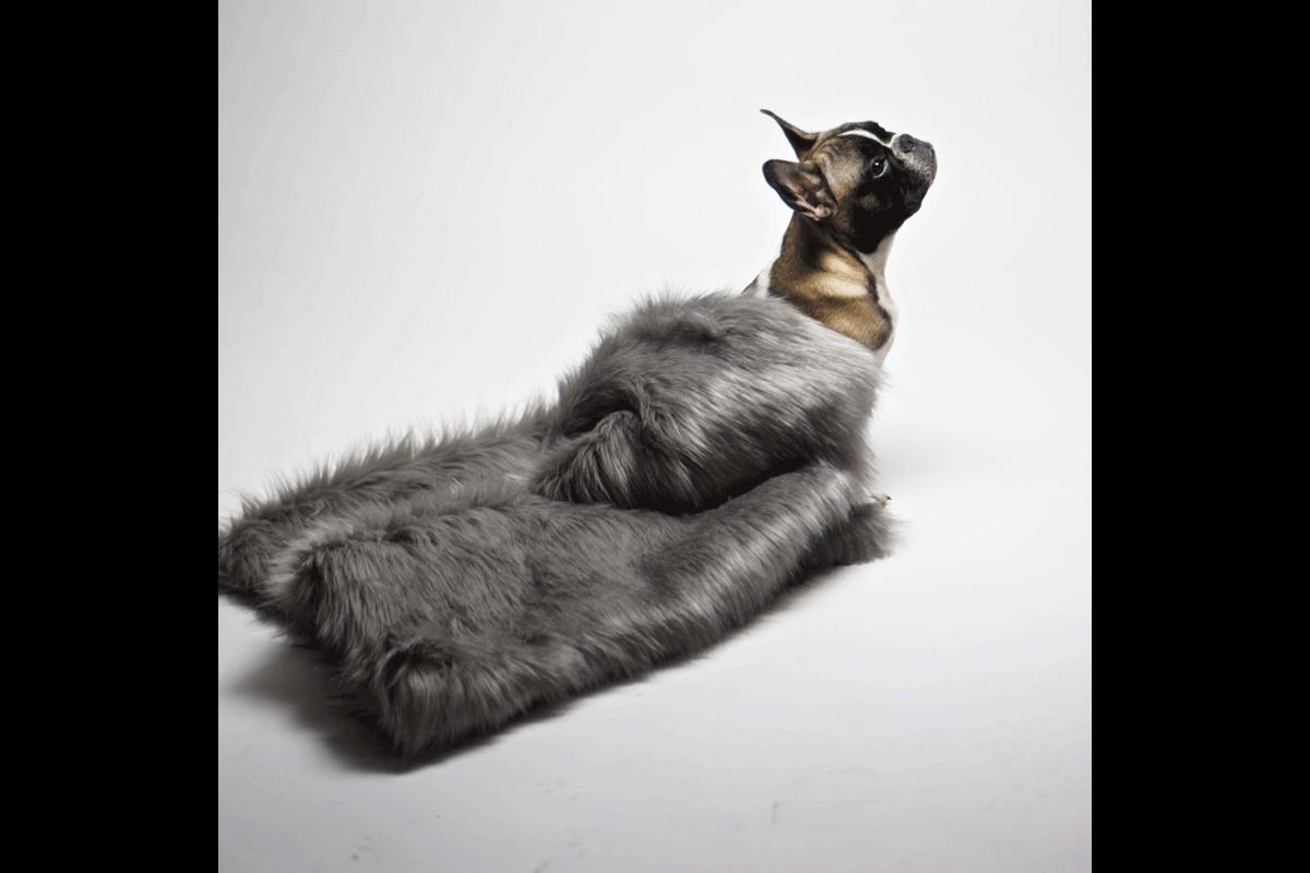 Labbvenn Föra hondendeken zilver