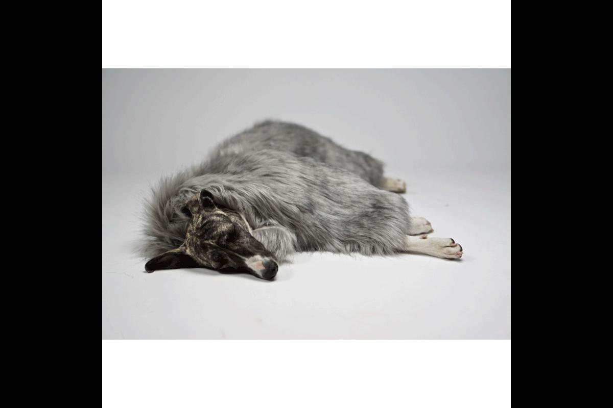 Labbvenn Föra Hundedecke Silber