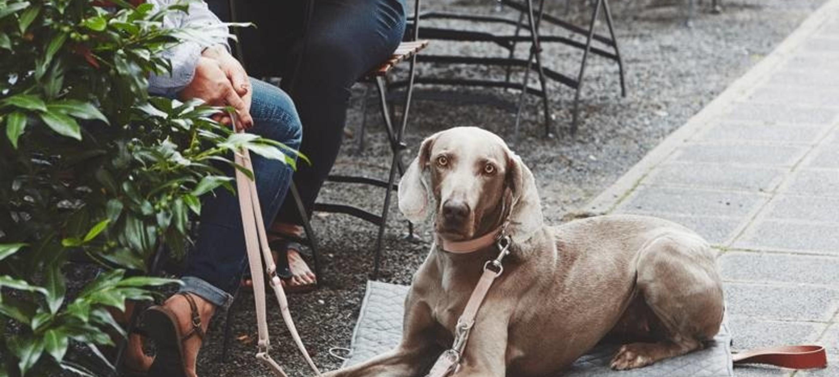 Hoe maak je jouw huis tot een thuis voor je nieuwe hond?