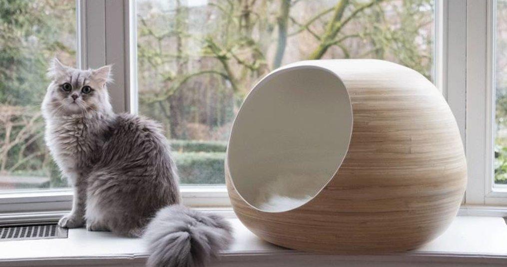 Je kat comfortabel de kou door