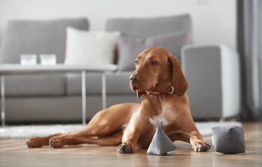 Hoe zet je jouw huisdier op dieet?