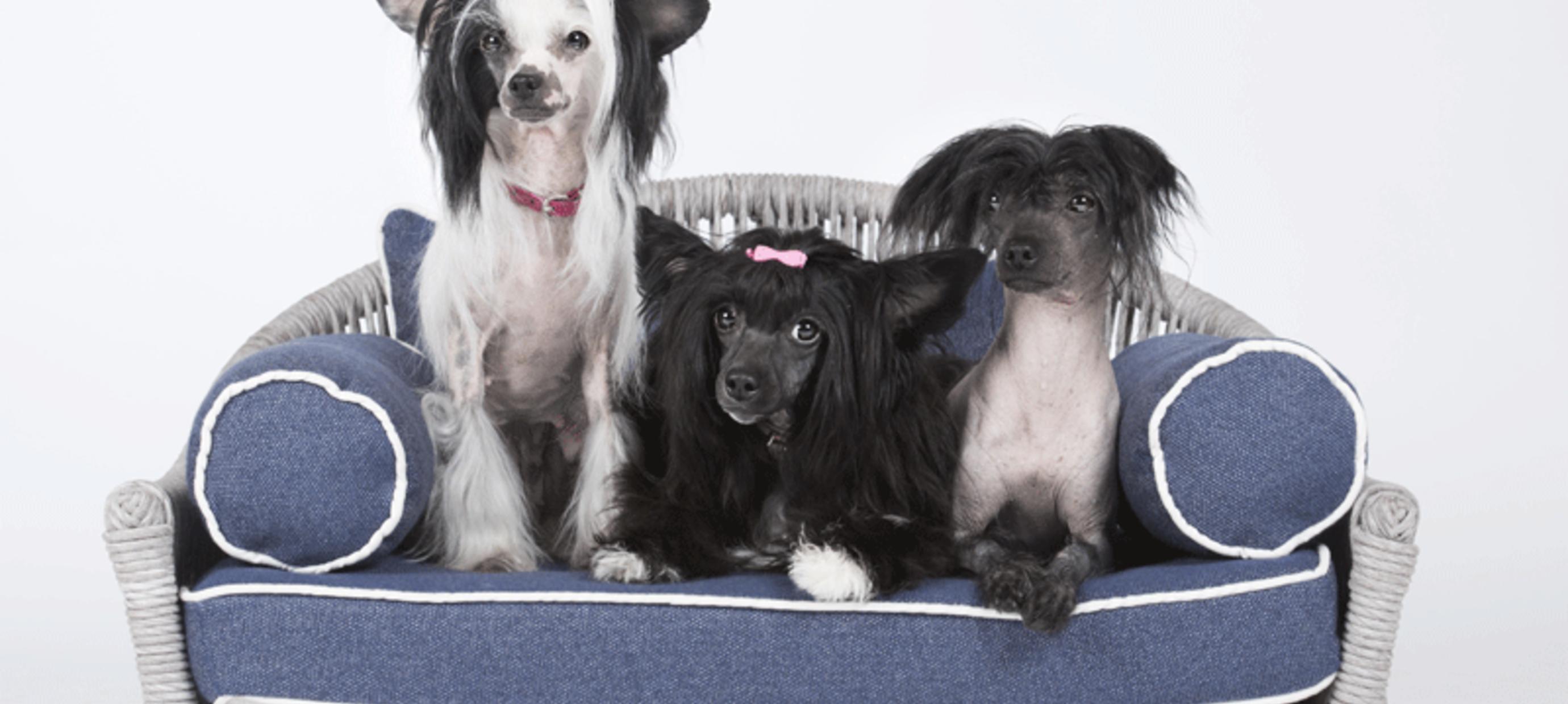 Kies een comfortabel bed voor je hond