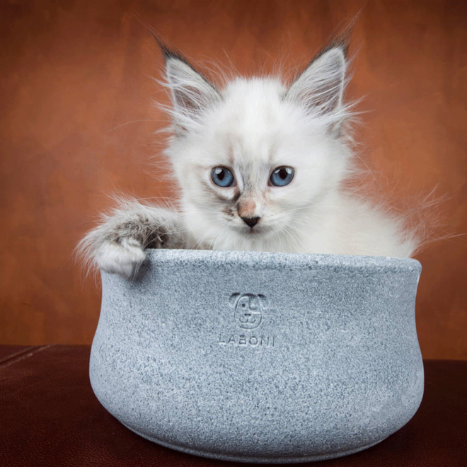 Laboni Design Food Bowl Rocky