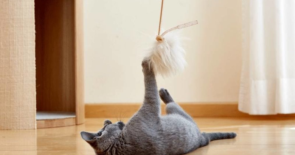Waar moet goed speelgoed voor je kat aan voldoen?