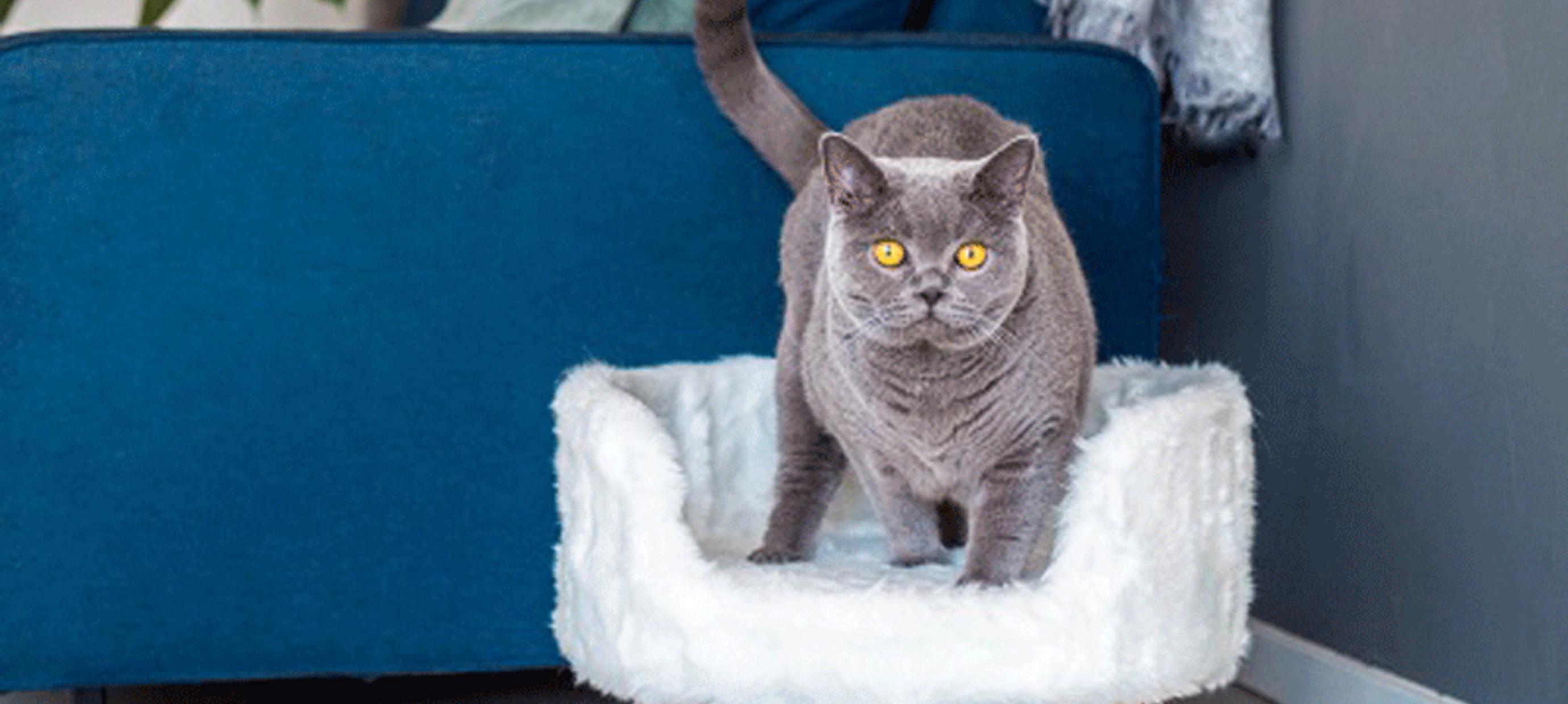 Laat je kat ultiem genieten met een luxe kattenmand