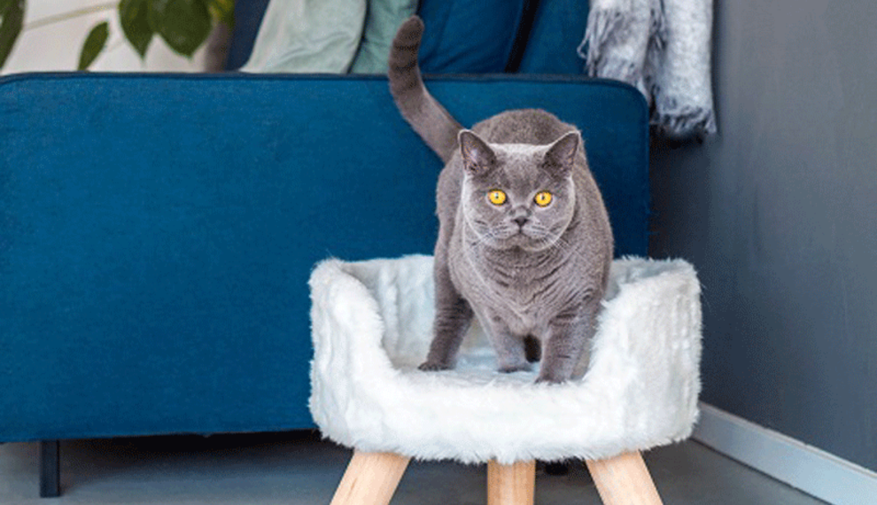 The ultimate  cat treat is a luxurious cat bed