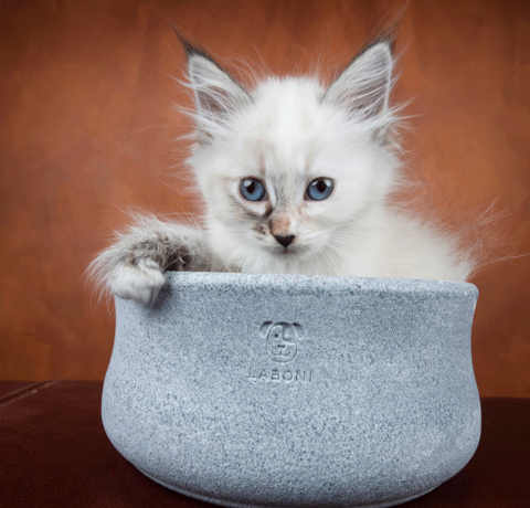 A safe cat bed for your cat