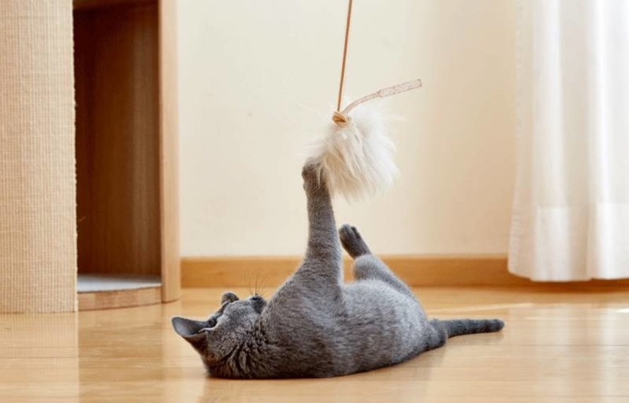 What are the criteria for good cat toys?