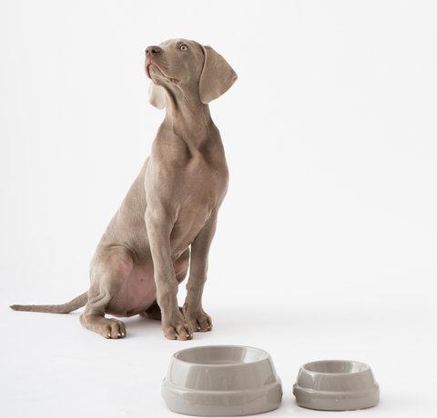 Wie machen Sie von Ihrem Haus ein Zuhause für ihren neuen Hund?