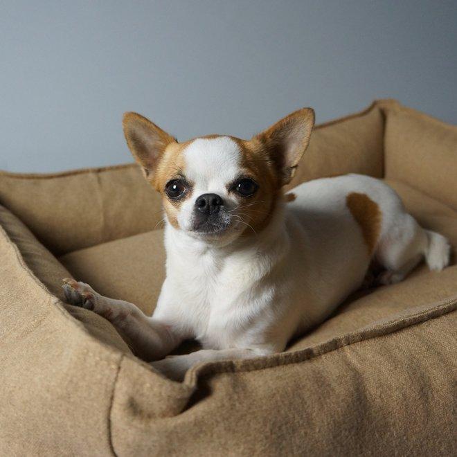 Labbvenn Movik Dog Bed Biscuit