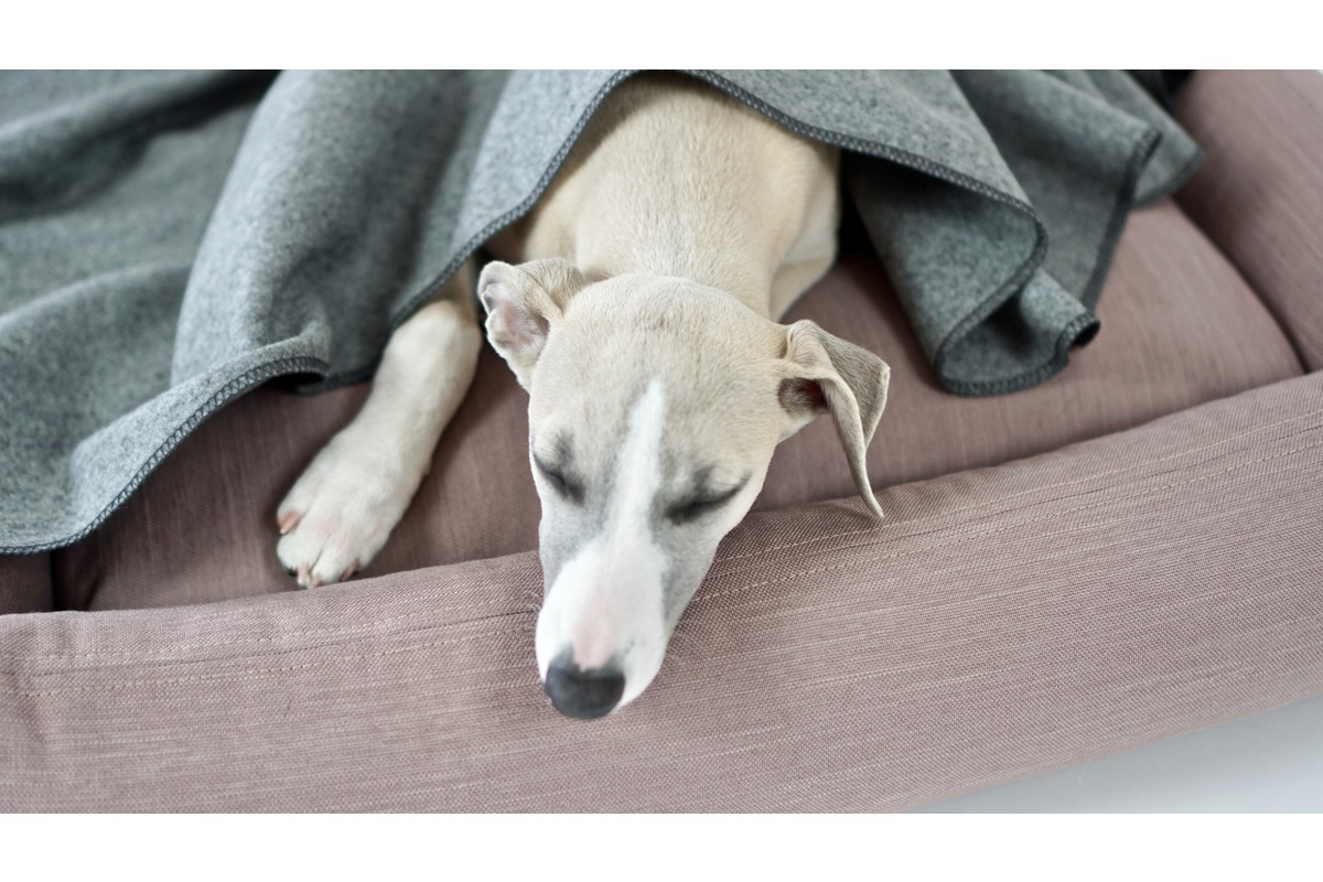 Labbvenn Åsnen hondendeken zilver