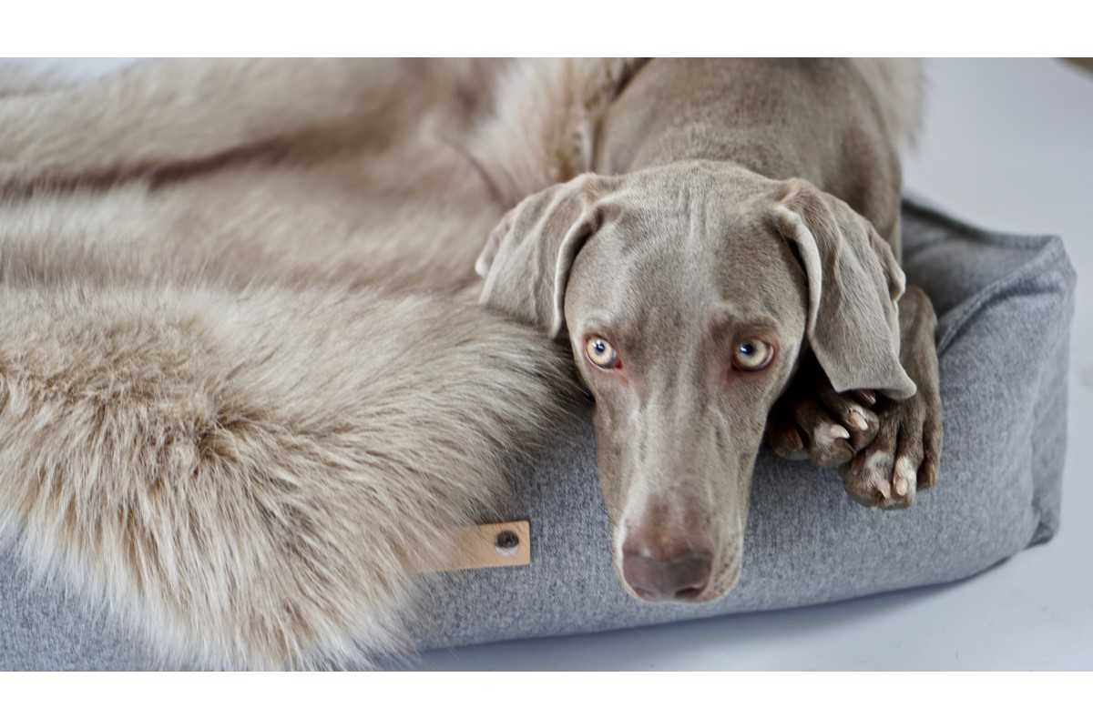 Labbvenn Föra hondendeken capuccino