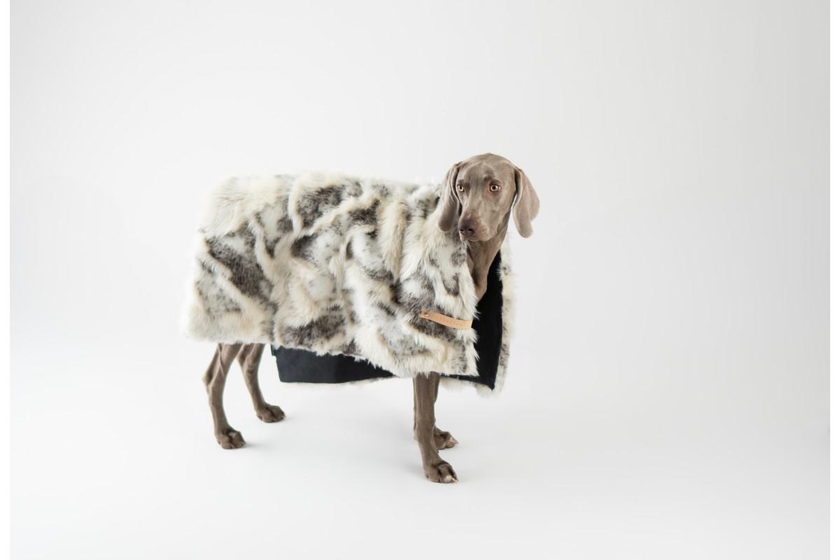 Labbvenn Tösse Hundedecke