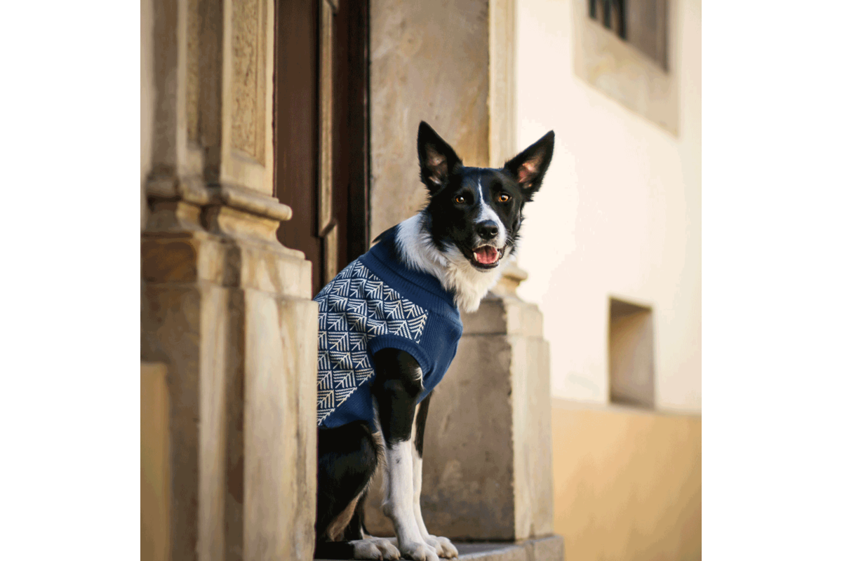 Labbvenn Pullo hondensweater blauw