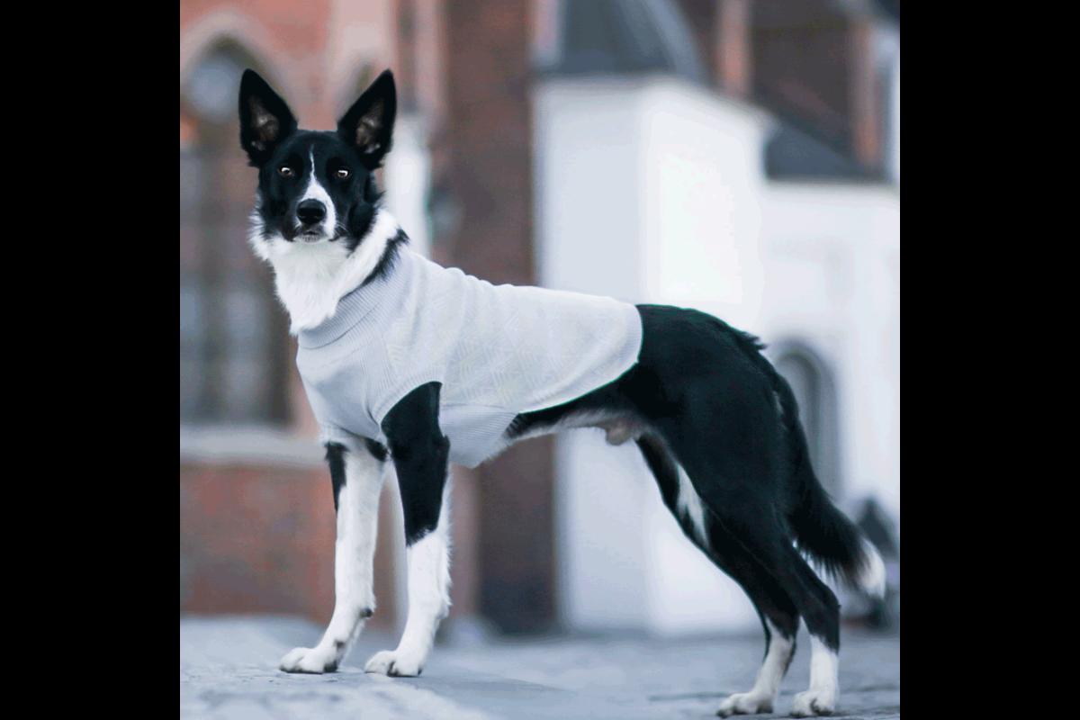 Labbvenn Pullo hondensweater grijs