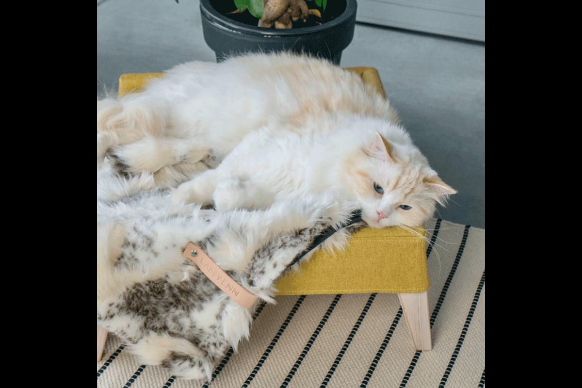 Labbvenn Lulu kattenbed honing