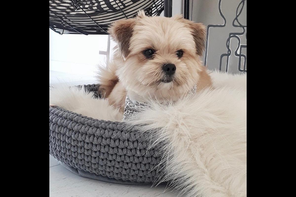 Labbvenn Coco hondenmand beige