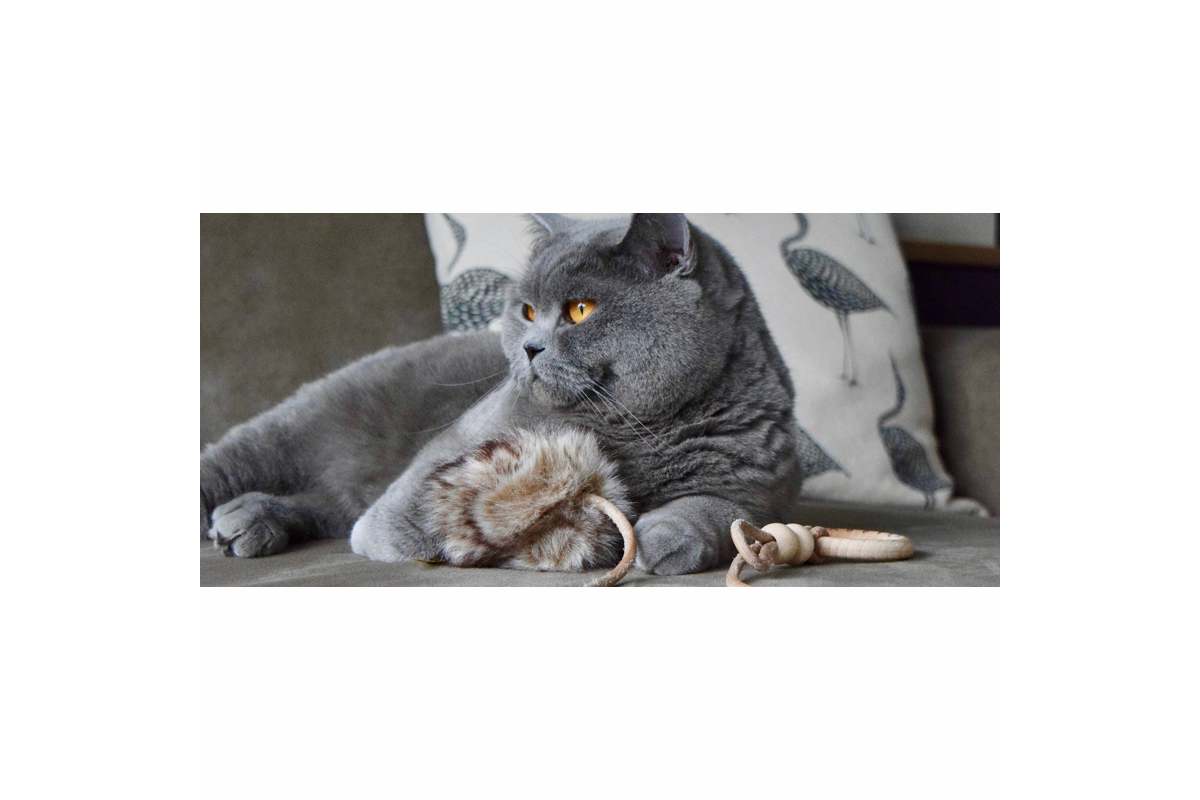 Labbvenn Musse kattenspeeltje bruin