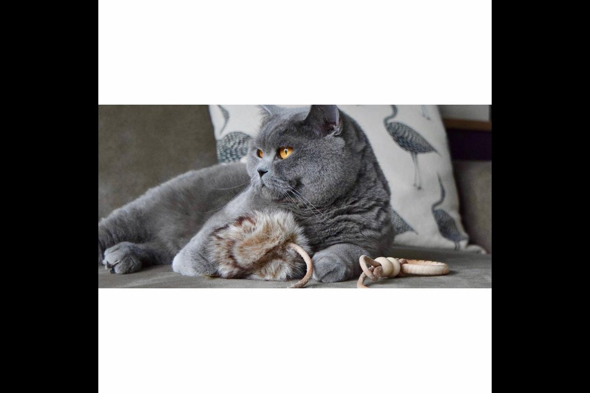 Labbvenn Musse Cat Toy grey