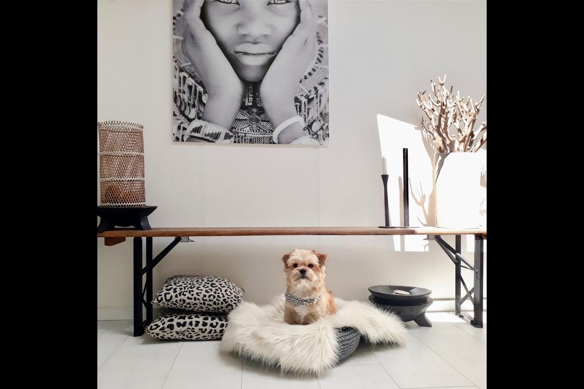 Labbvenn Coco Hundebett  braun