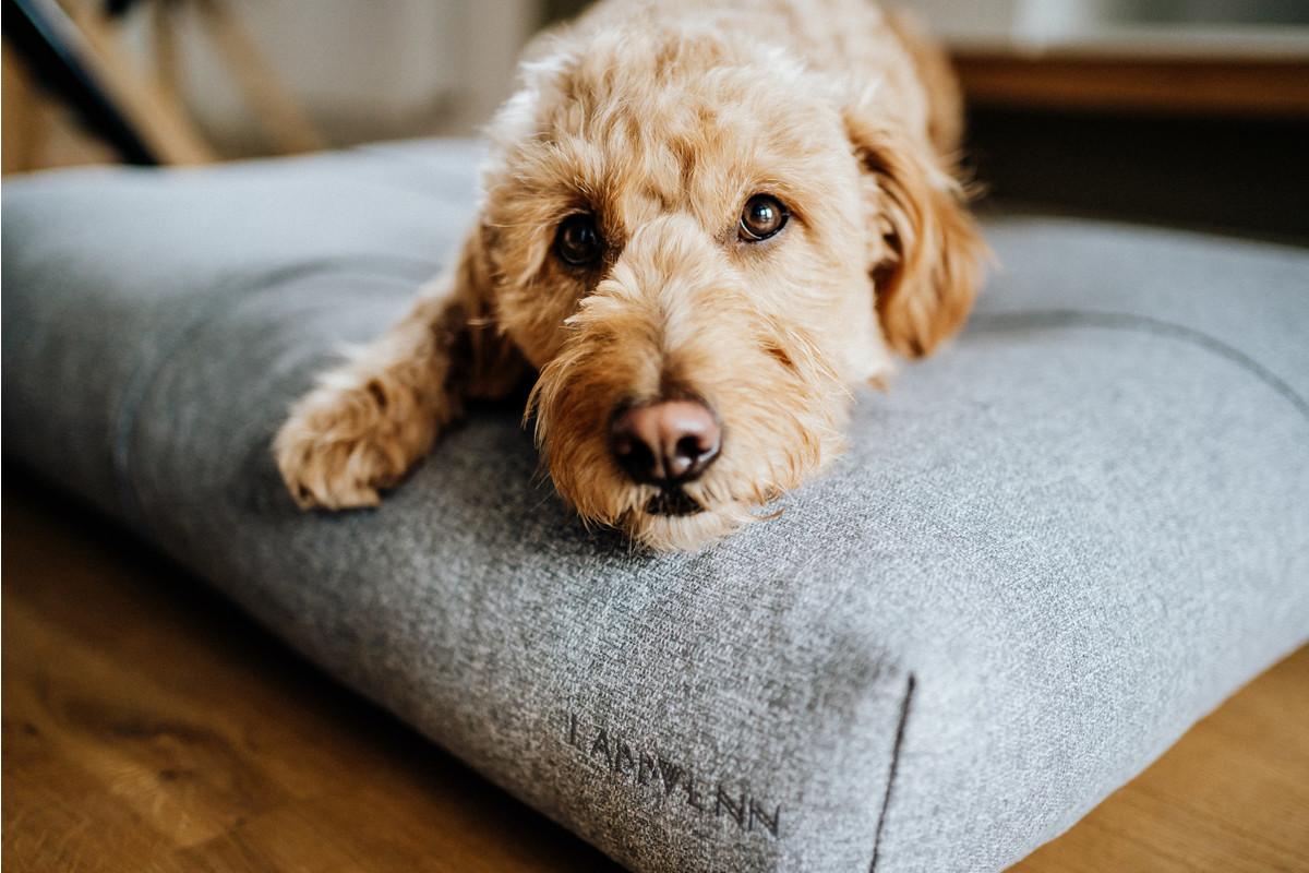 Labbvenn Finno dogcushion Grey