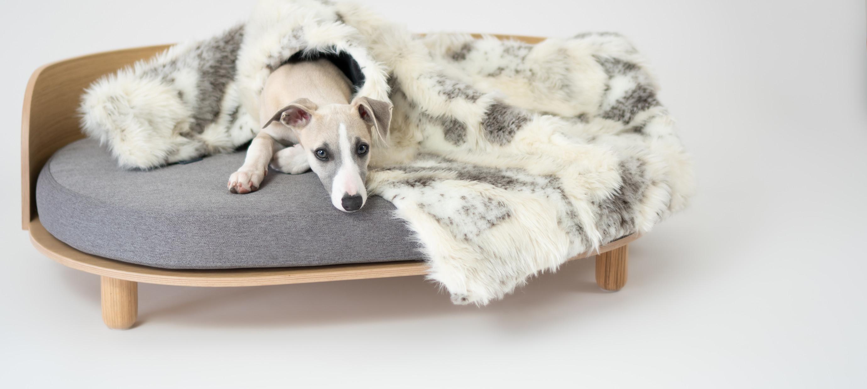 Waarom een goed hondenbed belangrijk is