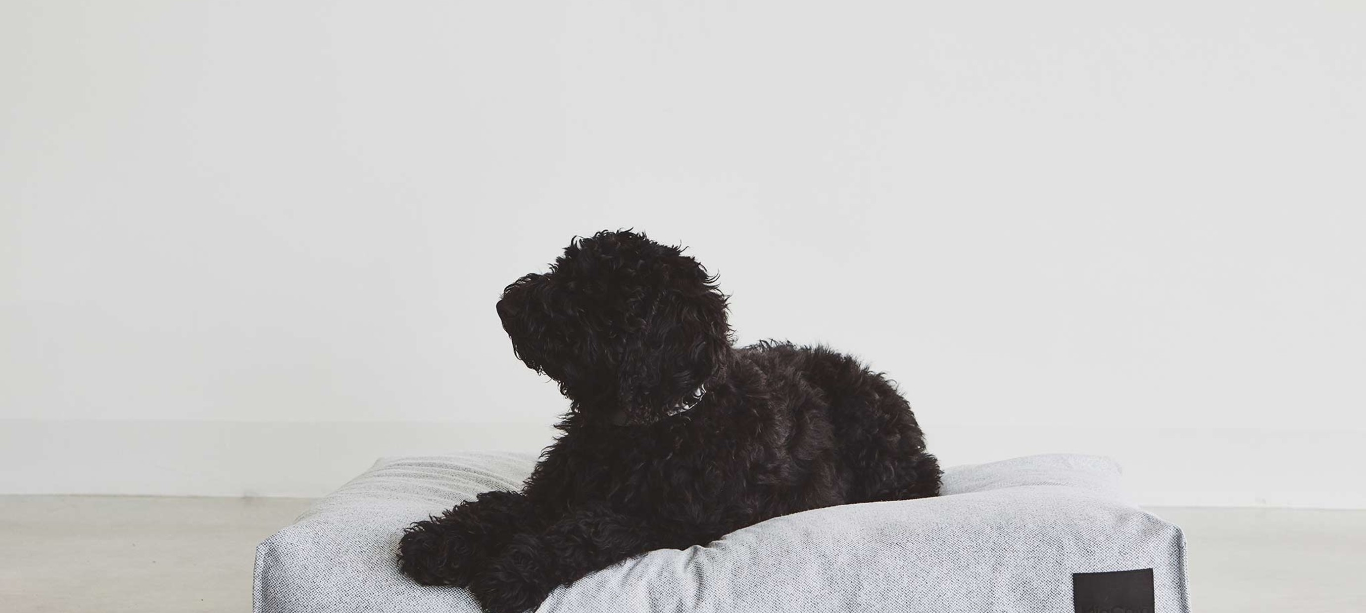 How to find the best dog cushion?