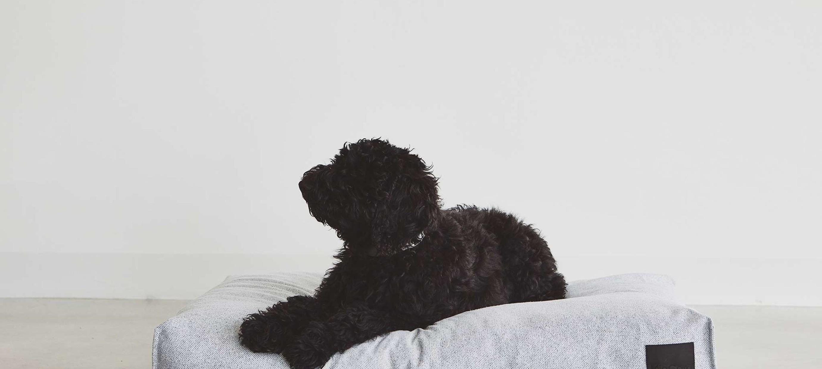 Hoe vind je het beste hondenkussen?