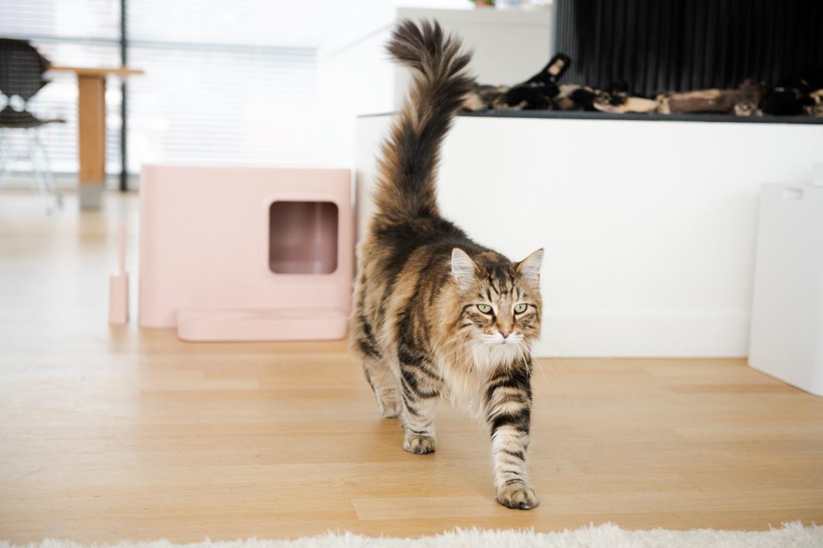 Hoopo® Dome Plus Katzenklo Rosa