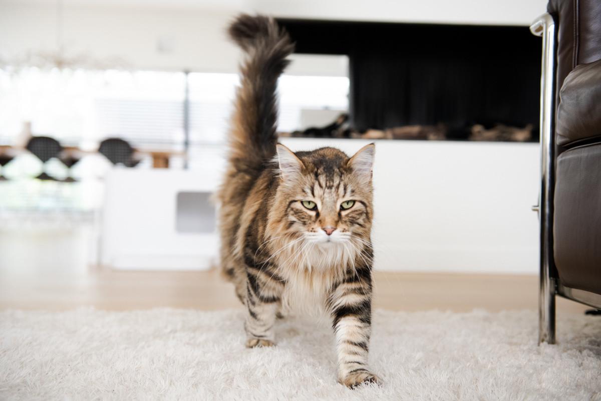 Hoopo® Dome Plus Cat Litter Box White