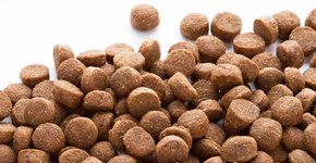 Hondenvoeding & Toebehoren