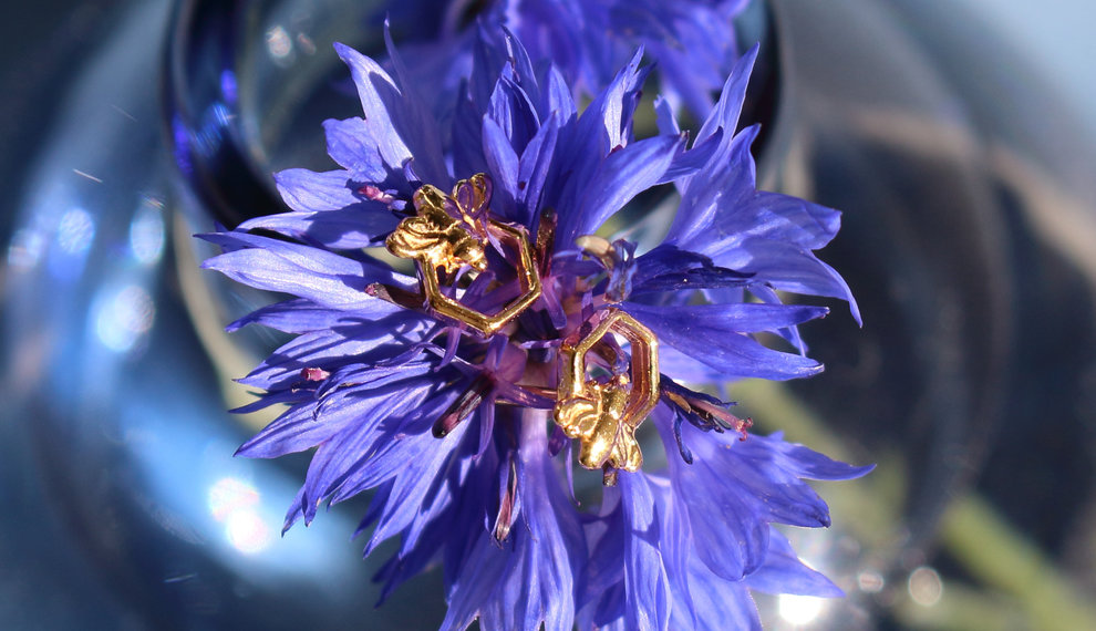 About the birds and the bees - sieraden met dieren