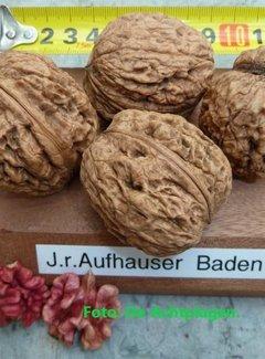 Walnootboom Aufhauser Baden