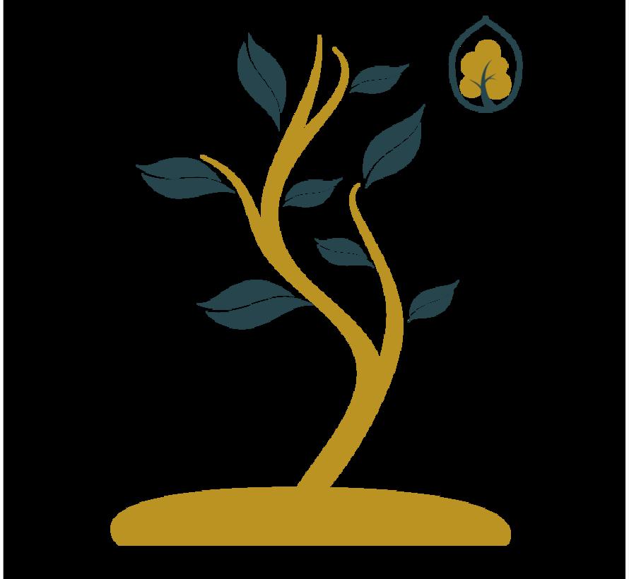 Baum Pflanze Paket