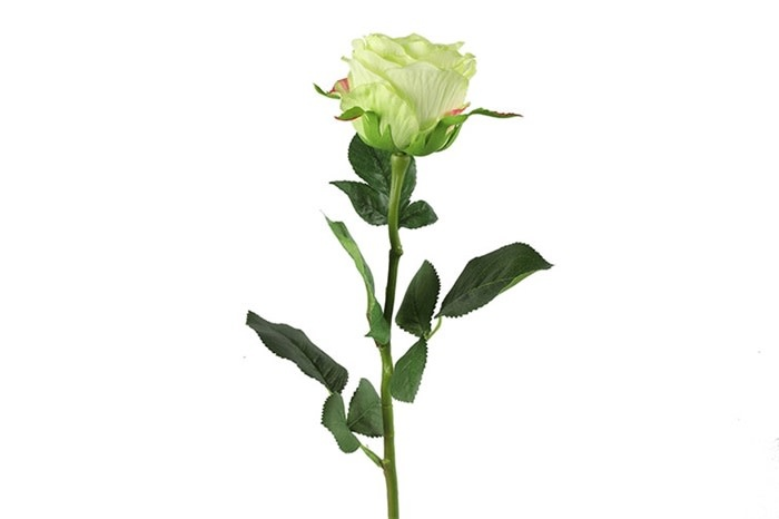 Rosa groen