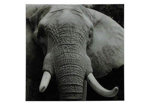 COUNTRYFIELD Schilderij olifant A vk Wild life L zwart/wit
