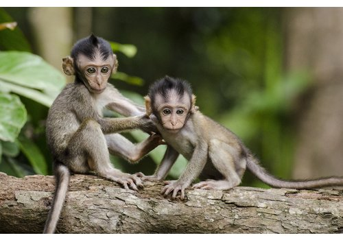 HERMSEN SFEERVOL WONEN Canvas - Monkey