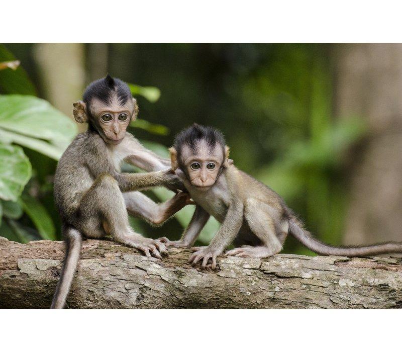 Canvas - Monkey