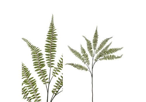 PTMD FERN PLANT GREEN FERN SPRAY