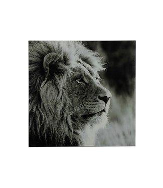 COUNTRYFIELD Schilderij leeuw A vk Wild life L zwart/wit
